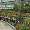 بازار گل و گیاه شهید فکورى
