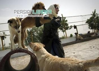 حیوانات خانگی نگین تهران